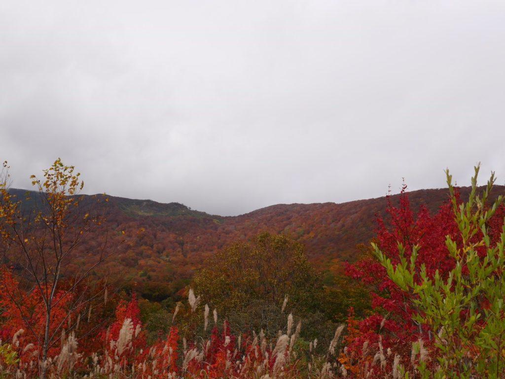 早池峰山・栗駒山 眩しい光が降り注げられていなかったので、薄暗いベールに包まれた紅葉最盛期の二名山